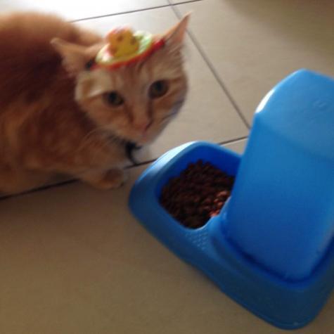 Cat hat